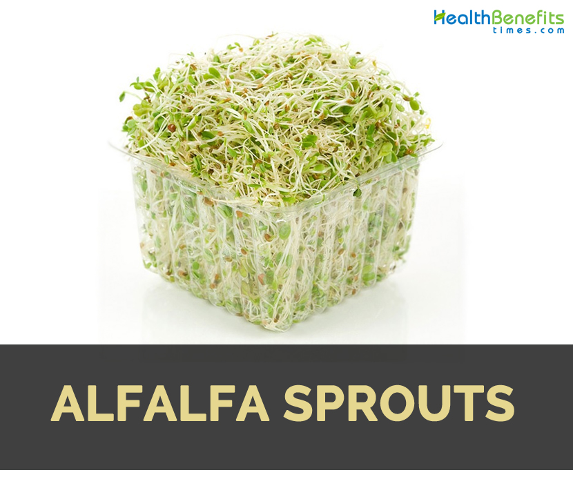 Alfalfa sprouts Facts, Health Benefits