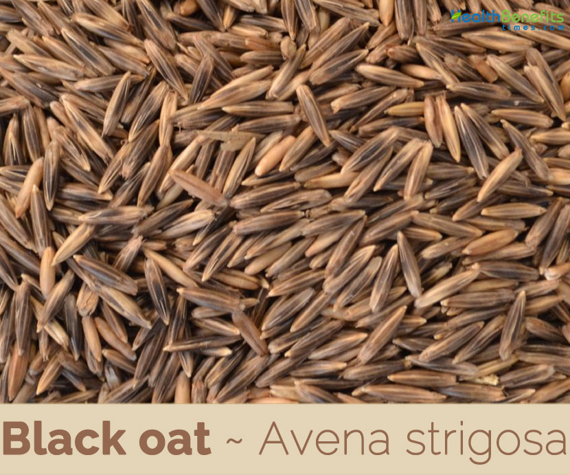Facts about Black Oats