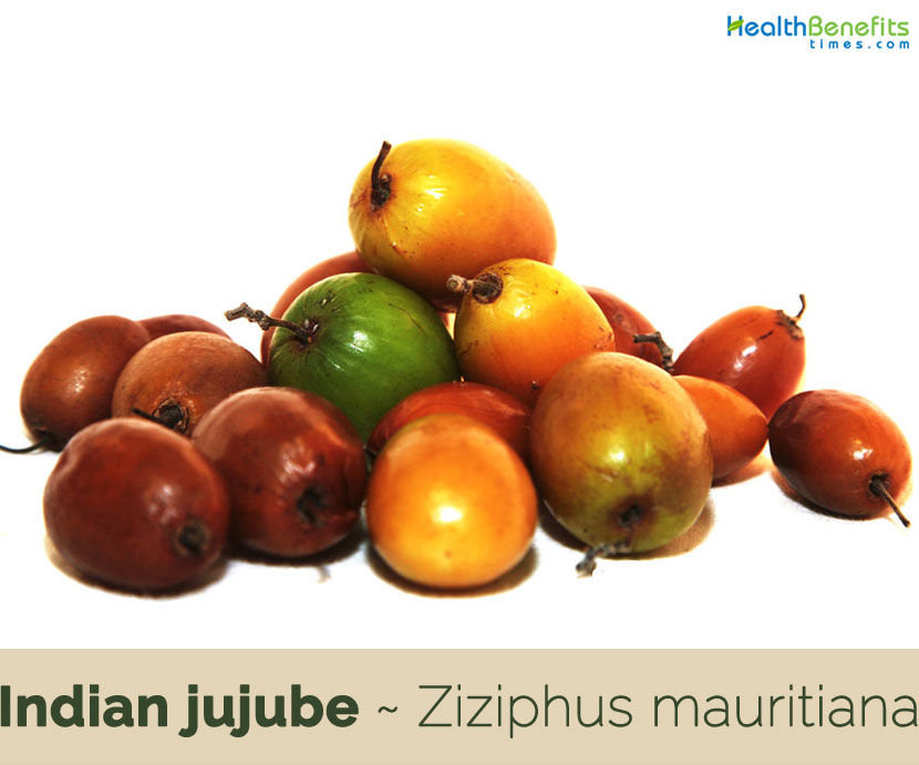 Indian jujube facts and health benefits
