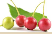 Health benefits of Jamaica Cherry