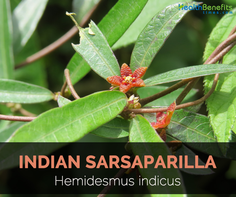 Hemidesmus indicus Facts and Health Benefits