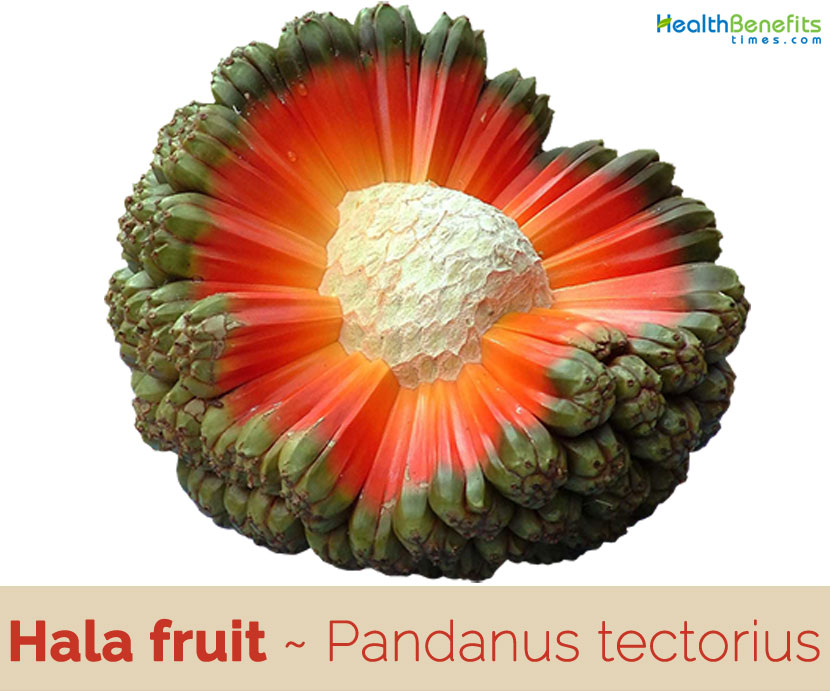 Hala fruit facts and health benefits