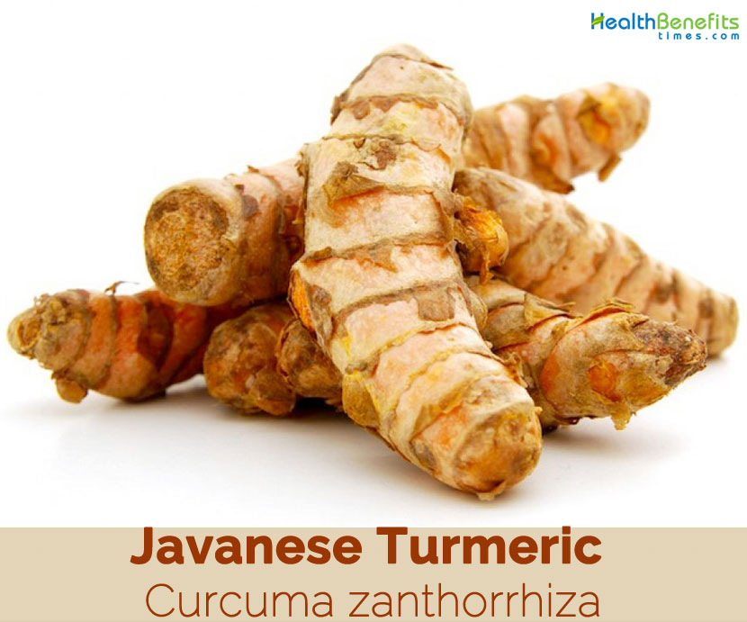 Javanese Turmeric Facts And Health Benefits