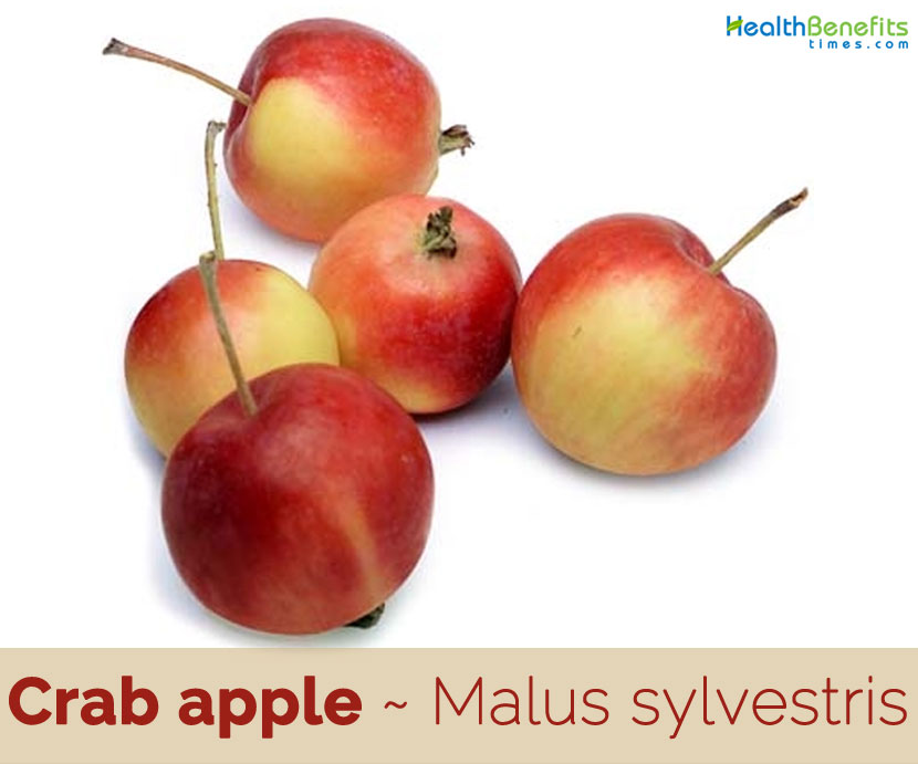 Crab Apple Facts And Health Benefits