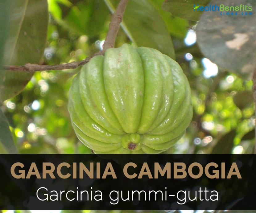 Reines Garcinia Cambogia Thailand