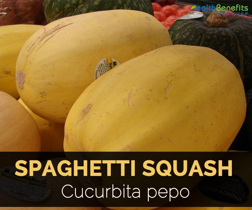 Spaghetti Squash Facts And Health Benefits